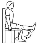 seated-leg-curl.jpg